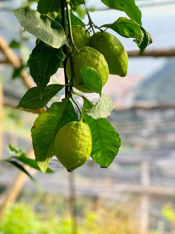 green-lemons.jpg